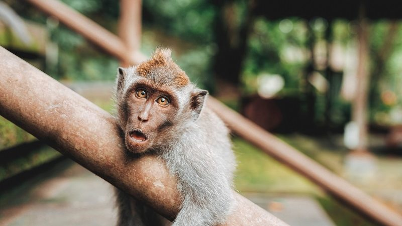 Best Animal Quotes All Animal Lovers Should Know